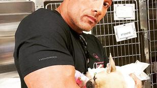 Dwayne Johnson kutyáját el kellett altatni