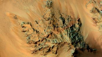 Találtak egy gombát, ami a Marson is megél