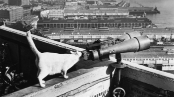 Macskát képezett ki kémnek a CIA