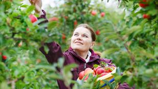 Ha jól tárolja, akkor sokáig lesz friss a most leszedett gyümölcs
