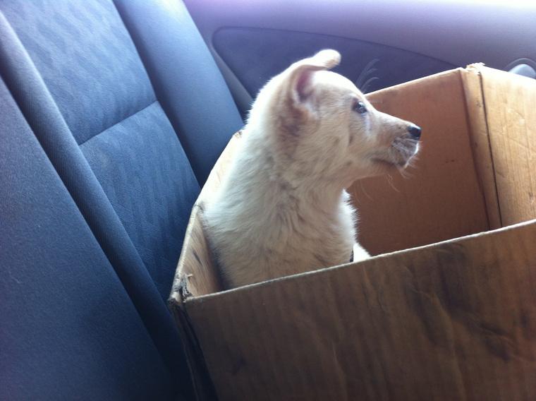Mici kutya ebben a dobozban hagyta el az Illatos úti telepet