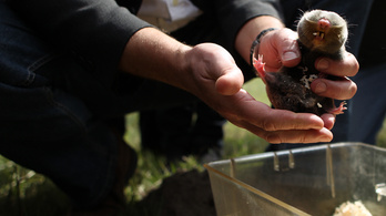 A kerítés miatt végveszélybe került a világ legcukibb állata