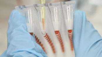 Új módszer hozhatja el az emberbe ültethető disznószerveket