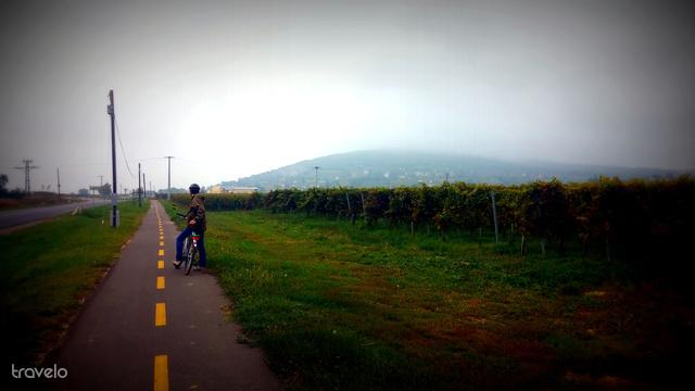 Ködös bringaút Villány határában