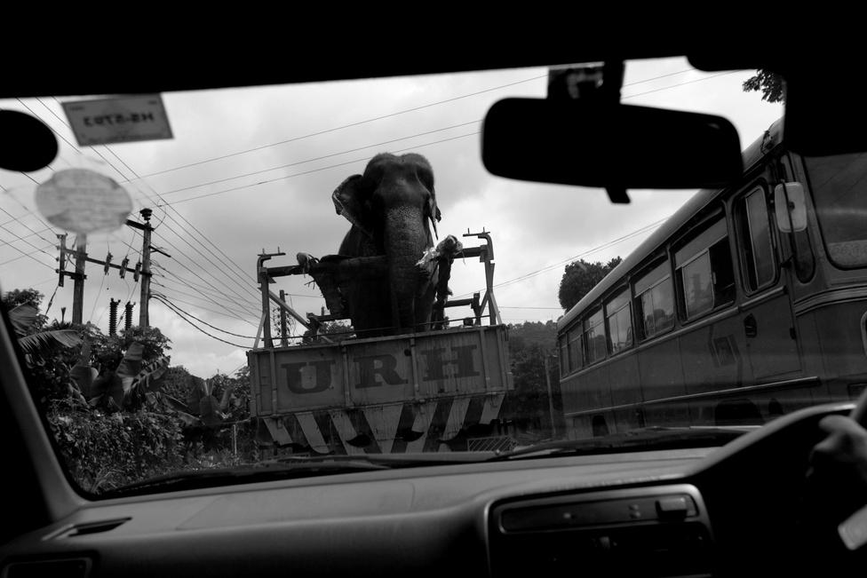 Mohannak az elefántok visszás helyzete Thaiföldön tűnt fel először, ahol a kolostorokban szentként tisztelik ezt az állatot, de nagyobb városokban sokszor látni , amint agresszív gazdájuk a turistákat szórakoztatja velük.