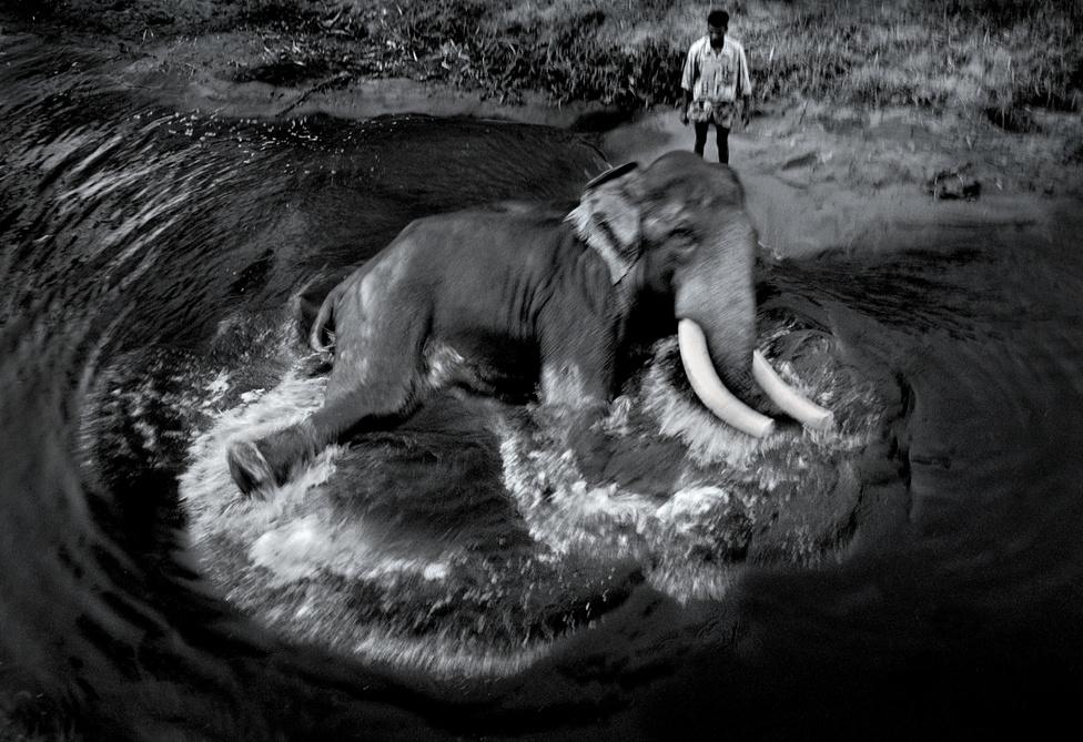 Mohan találkozott azért boldog elefántokkal is, akik a szabadban, csordában élve, órákig játszottak a kicsinyeikkel. A fotós a képekkel arra szeretné felhívni a figyelmet, mekkora veszélyben van ez a csodálatos állat, és arra kér minden turistát, ne lovagoljanak az elefántokon és nem adjanak pénzt a gazdájuknak.