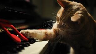 Veszélyes lehet túl nagy átéléssel játszani ezt a Bartók zongoradarabot