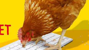 ZX X `````````qz h bum8 zx - üzeni a történelmi jelentőségű csirke