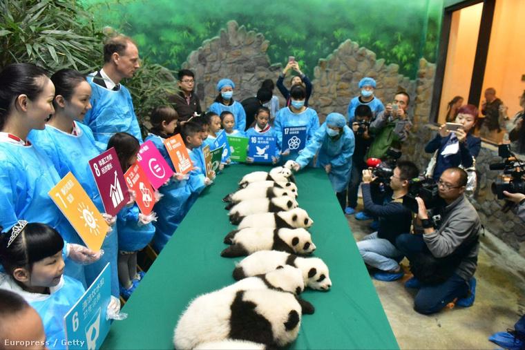 Fotó: Chinafotopress / Europress / Getty