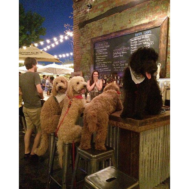 Az állatbarát hipsztereknek köszönhetően a kutyák is járhatnak kocsmába Brooklynban.