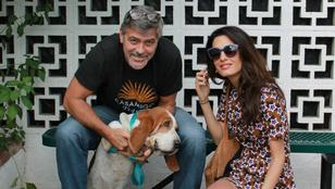 Cuki lénnyel bővült Clooney-ék családja