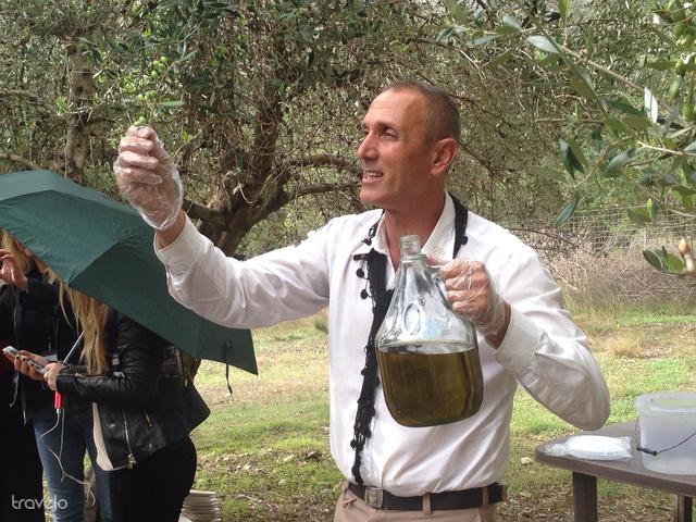Egy fáról kb. 30 kg olívát szüretelnek, ebből pedig 6 liter olaj lesz