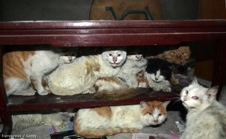 Kóbor macskák Tiencsinben