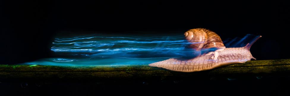 Turbó (Az állatok viselkedése kategória)Az unokaöcsémmel néztük az egyik kedvenc meséjét, ami Turbóról, a versenyző csigáról szól. Ekkor jött az ötlet: elkészítem neki a képet Turbóról – vagyis ahogy ő hívja, Tujbóról. A kép 2 perces expozíciós idővel készült, LED lámpával megvilágítva, és a második redőnyre villantva egy narancsfóliás vakuval.