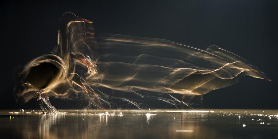Lépéselőny (Az év természetfotója) A sötét és fagyos éjszakában különleges látvány tárult elém, amikor megvilágítottam a lesem előtti vízfelületet. Gémek, rókák és vidrák a fénnyel mit sem törődve élték aktív életüket, számomra ismert környezetben, ám ez idáig láthatatlanul. Tizenöt év alatt már sok száz napot töltöttem halászó gémek és kócsagok fotózásával, az idei télen a mesterséges megvilágításnak köszönhetően mégis sikerült teljesen új képi világot alkotni. 47 napot és éjszakát fotóztam szünet nélkül, annyira magával ragadott az extrém fényviszonyokkal való képalkotás. Korábban sokat dolgoztam már vakufény mellett éjszaka, de ahhoz képest a folyamatos megvilágítás rengeteg új lehetőséget kínált. Hosszú expozíciós idő alatt a madarak mozgásukkal hozták létre a kompozíciót, minden egyes képet teljesen egyedivé téve ezzel.