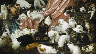Ilyen az, amikor az asszony a macskákért rajong