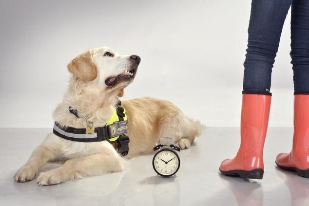 Kuku, a hangjelző kutya
