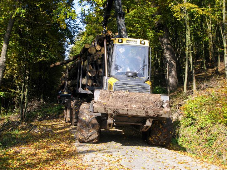 Kiért a Buffalo az erdészeti aszfaltútra, innen már teherautó viszi tovább a fát