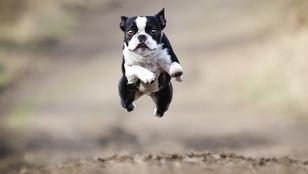 Pavlov magyarázza, hogy miért félünk a kutyáktól