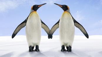 A pingvinek maguktól feltalálták a prostitúciót