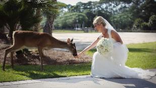 Perfekció: benézett egy őz az esküvői fotózásra