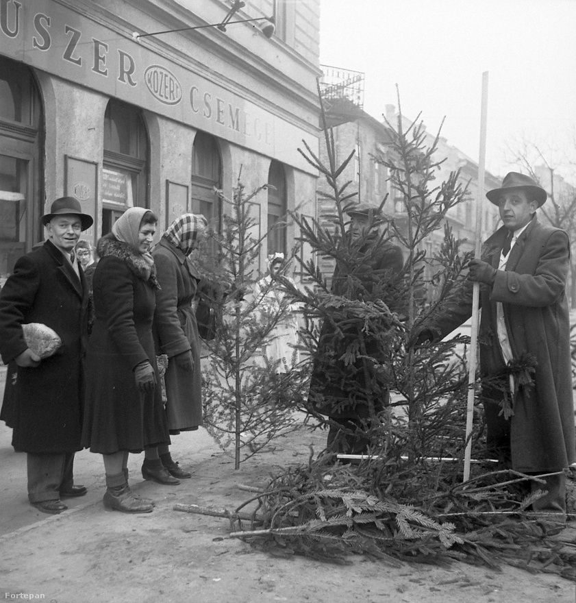 Kókadt fákat nézegetnek a népek a közért előtt 1958-ban. Talán azért ilyen satnyák a fák, mert 1958-ban igen szélsőséges időjárás volt Magyarországon: áprilisban őrületes fagy jött, amit nyolcvan év legmelegebb, száraz májusa követett. A június aztán újra elég hideg volt és nagyon esős a KSH korabeli jelentése szerint. Egyébként 1952-től a hatvanas évekig viszonylagos árstabilitás volt Magyarországon. De például az olyan idénycikkek ára, mint a fenyőfáé, közben rendesen elszaladt, átlagosan 20 százalékot drágult 1952 és 1968 közt. Persze árat emelni nehézkes volt, ezért a kereskedők ezt gyakran minőségi manipulációval tették meg.