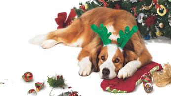 Karácsonykor még a rossz filmet is jó nézni
