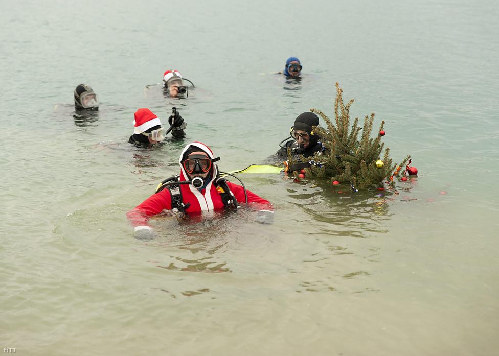 A Mikulás miért ne járhatna a hegyeshalmi bányatóban? Itt évente tartanak hagyományos karácsonyi búvárünnepséget,  a tó mélyén fenyőfát is állítanak. Amúgy ez a házakban sem túl régi szokás, német területről indult és csak a 19. században terjedt el, egészen széles körben inkább a 20. századra terjedt el.