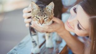 Igazi álommeló: hivatásos macskasimogatót keresnek