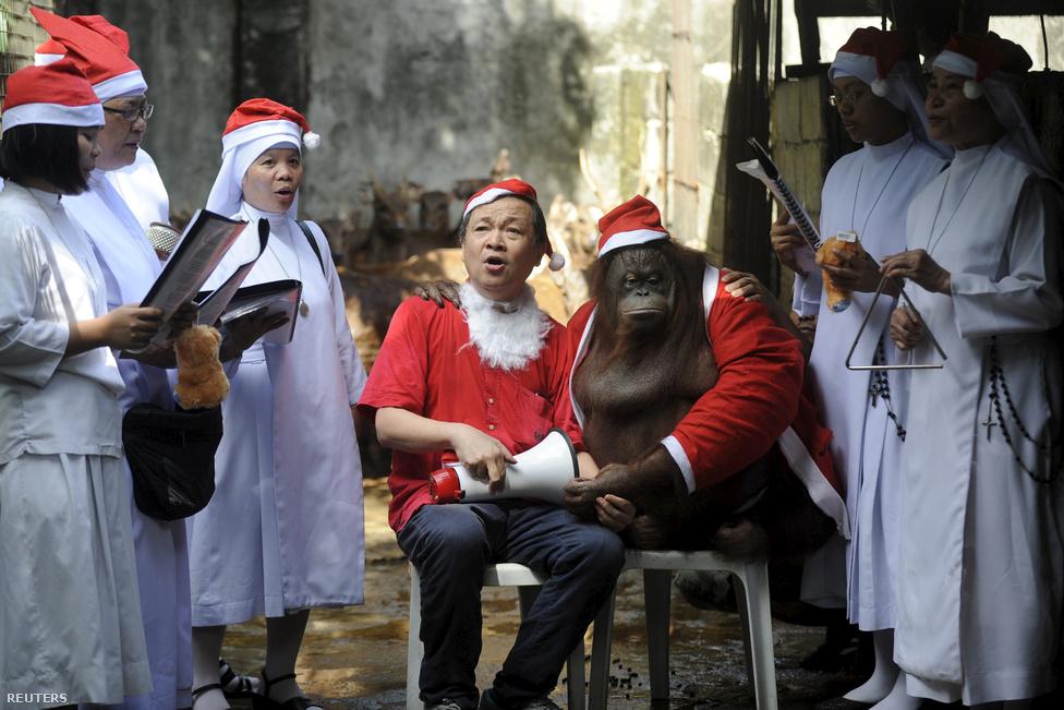 Végre egy krampusz? Ja, nem egy télapó-orangután a manilai állatkertben. Mellette pedig az állatkert igazgatója ül. A Fülöp-szigetek Ázsia egyetlen keresztény többségű országa, ennek megfelelően gazdagítja a keresztény hagyományokat. Persze az emberszabású felöltöztetése semmi a húsvét előtti tömeges önkéntes keresztre feszítés helyi szokásához képest.