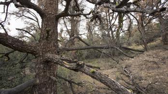 60 millió fa száradt ki Kaliforniában