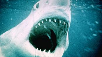 Bruce, a cápamodell új helyre költözik