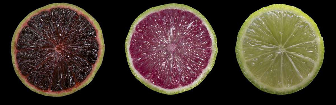 purple-lime-crop