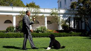 El akarták rabolni Barack Obama cuki kutyáit