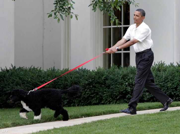 Barack Obama és a család egyik kutyája a Fehér Ház kertjében