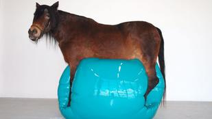A londoni Saatchi csak csajos kiállítással ünnepli a születésnapját