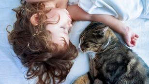Heti cuki: gyerek és állat, háromszor