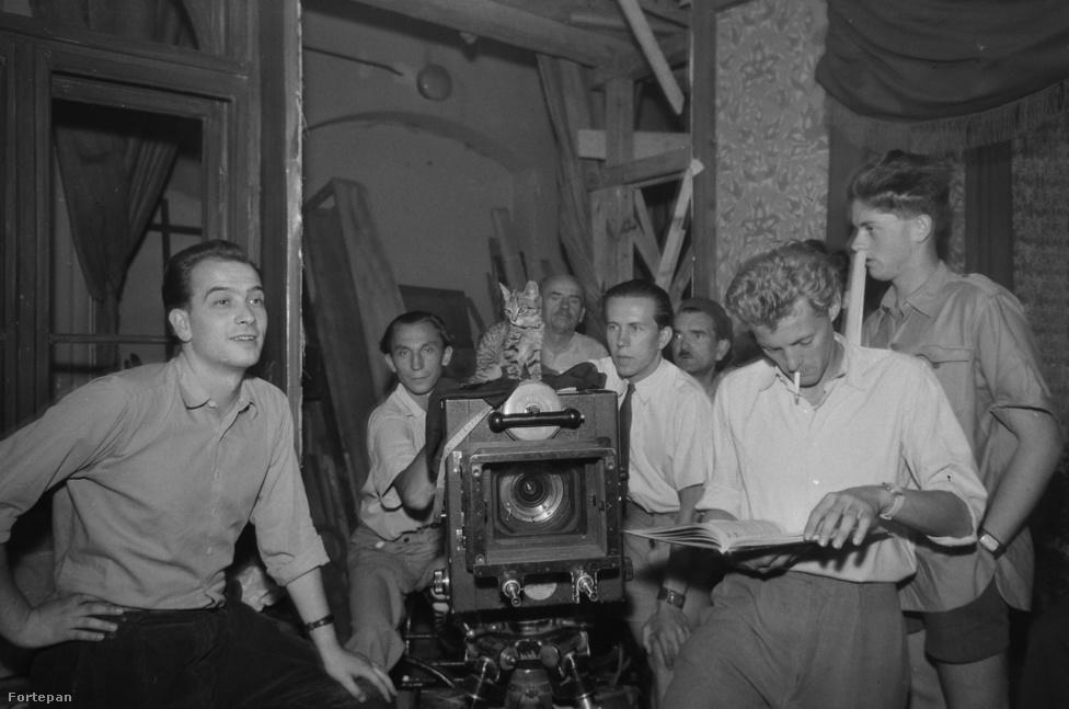 A Három szív című (végül soha el nem készült) film forgatása 1957-ben egy kamerán trónoló kismacskával. Balról jobbra: Bácskai-Lauró István a film rendezője, Neuman László operatőr, egy ismeretlen macska, Száz Nándor segédoperatőr, Novák Márk első asszisztens, a jobb szélen Kézdi-Kovács Zsolt.