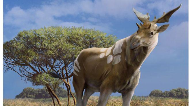 87670230 c0149899-prehistoric giraffe-spl