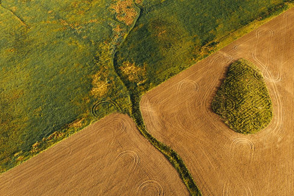Az a kirívóan zöld folt egy mező, ami a különösen esős időszak miatt tűnik ki ennyire a frissen vágott búzaföldből.