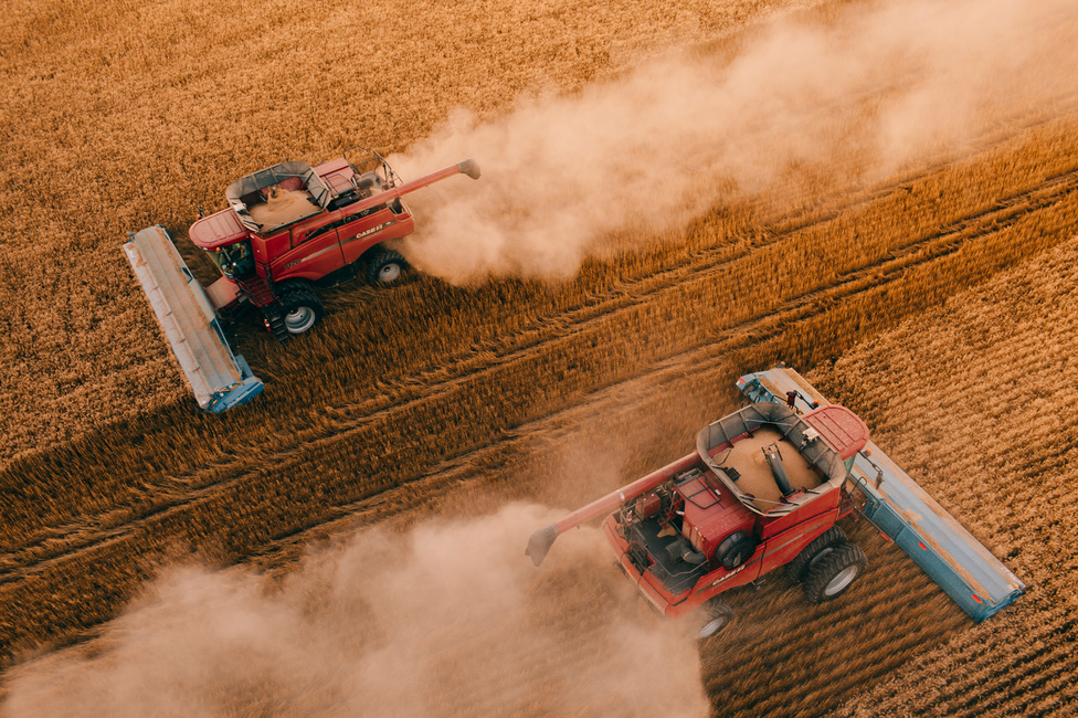 Szinte koreografáltnak tűnik, ahogy a kombájnok egy új táblán megkezdik az aratást.