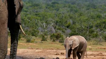 Dzsihadisták miatt pusztulnak az elefántok