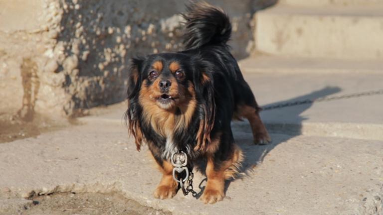 Láncon tartanak kutyákat, pedig január óta tilos