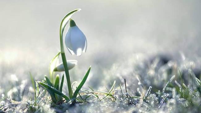 Egy hónapot késett, de végre kezdődik a hóvirágünnep