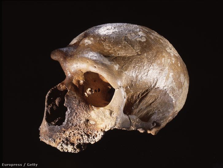 Egy neandervölgyi koponyája