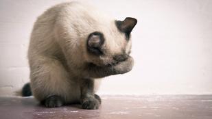 Angliában véletlenül elpostáztak egy macskát, de túlélte