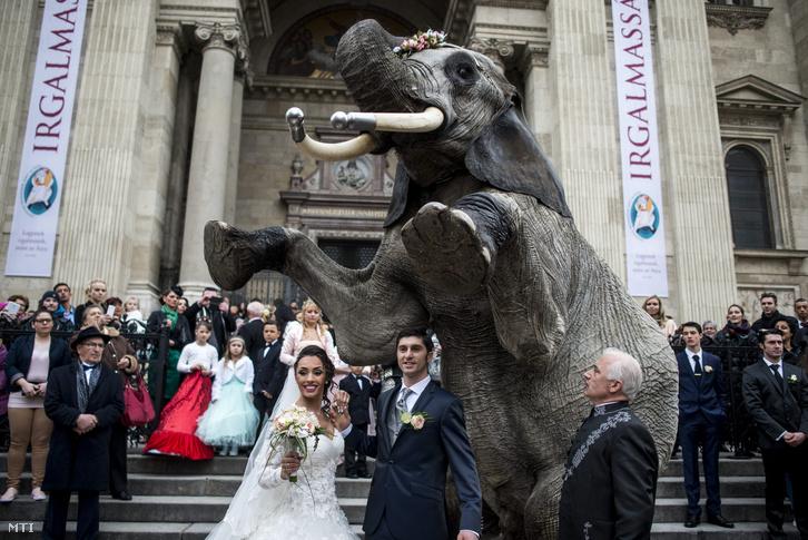 Merrylu Casselly német artista és ifjabb Richer József a Magyar Nemzeti Cirkusz igazgatója, esküvőjük után, a Mambó nevű elefánttal fotózkodnak a Szent István-bazilika előtt.