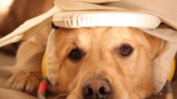 Kutyák öregedését vizsgálják az ELTE-n
