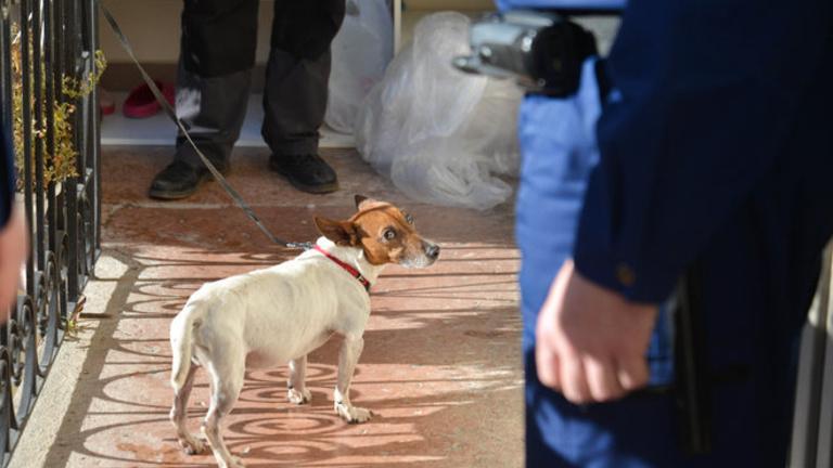 Több ezren tüntethetnek az állatkínzás ellen