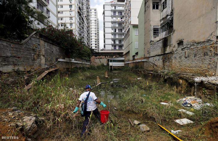 Szúnyoglárvákkal táplálkozó halakat telepít a lakótelepek pocsolyáiba egy szúnyogirtó Rio de Janeiro egyik negyedében